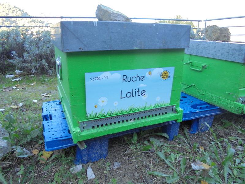 La ruche Lolite