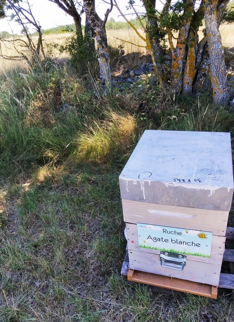 La ruche Agate blanche