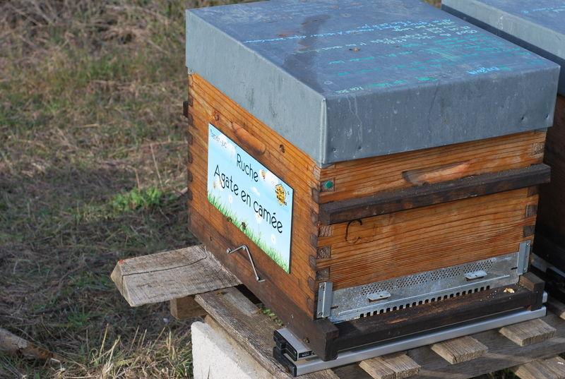 La ruche Agate en camée