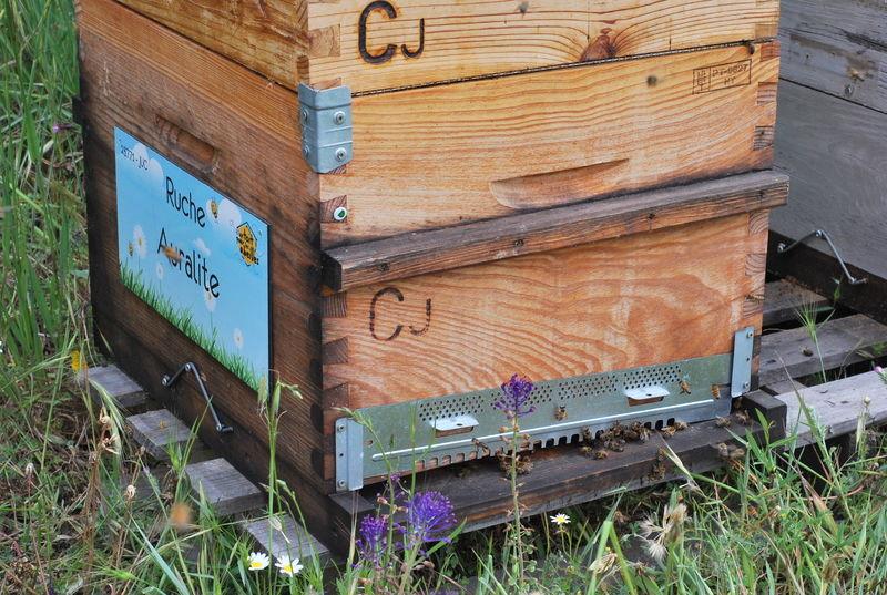 La ruche Auralite