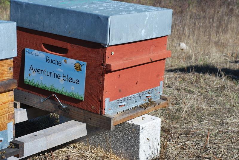 La ruche Aventurine bleue
