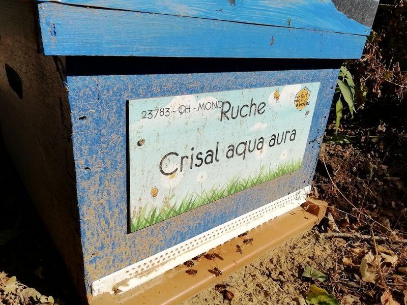 La ruche Crisal aqua aura