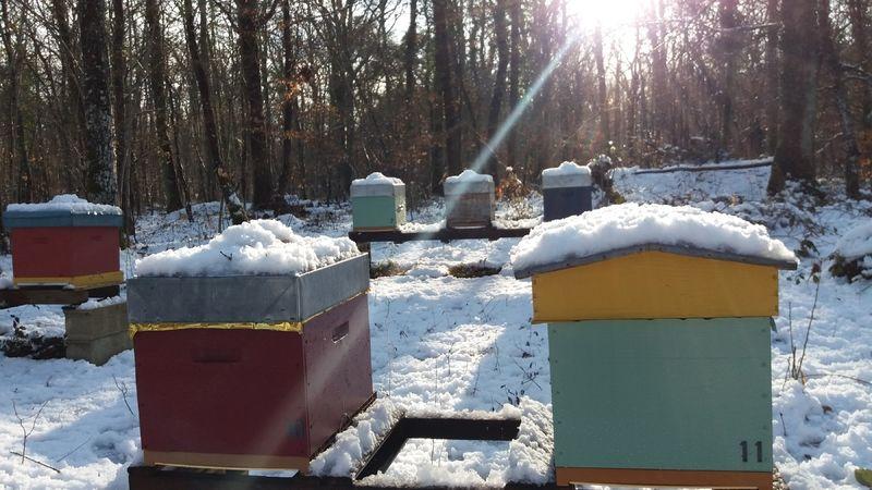 La ruche Cyanite verte