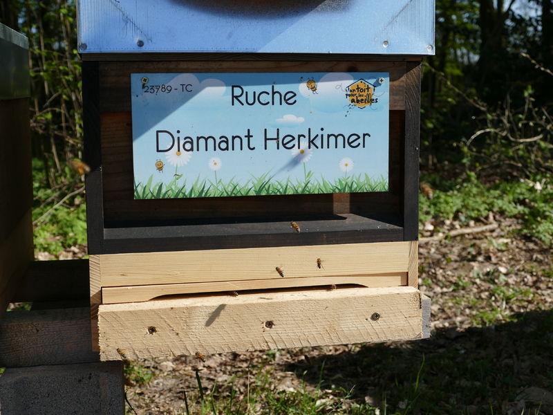 La ruche Diamant Herkimer