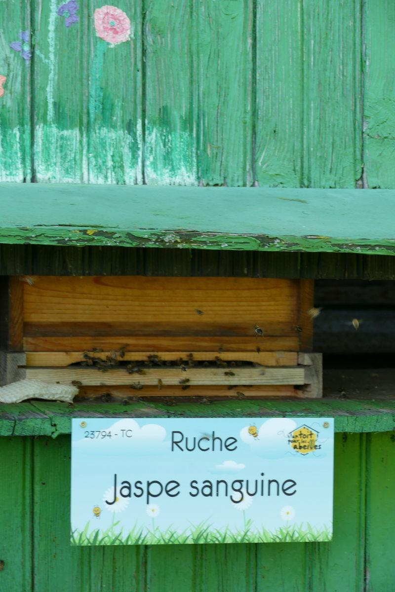 La ruche Jaspe sanguine
