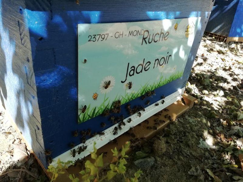 La ruche Jade noir