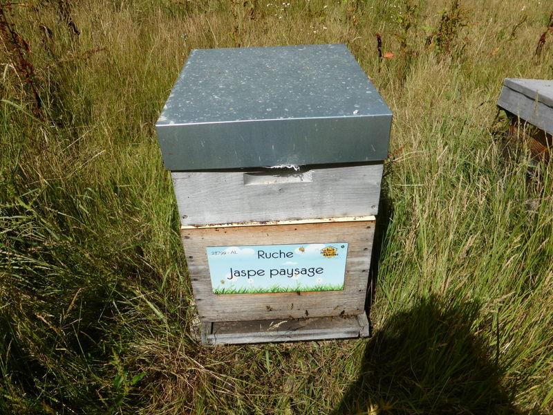 La ruche Jaspe paysage