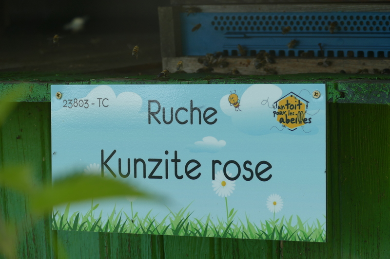 La ruche Kunzite rose