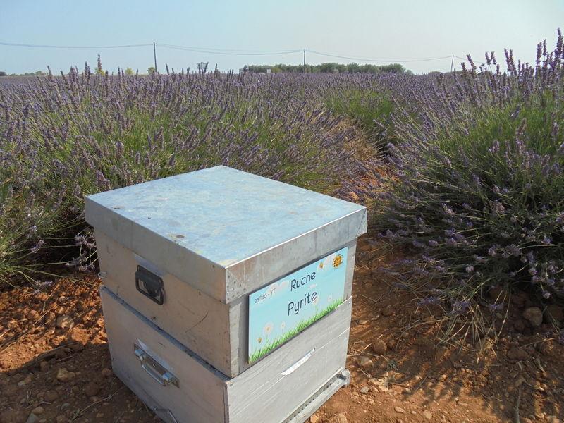 La ruche Pyrite