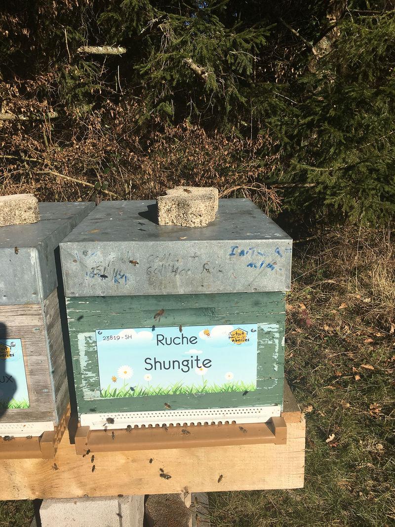 La ruche Shungite