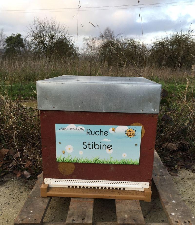 La ruche Stibine