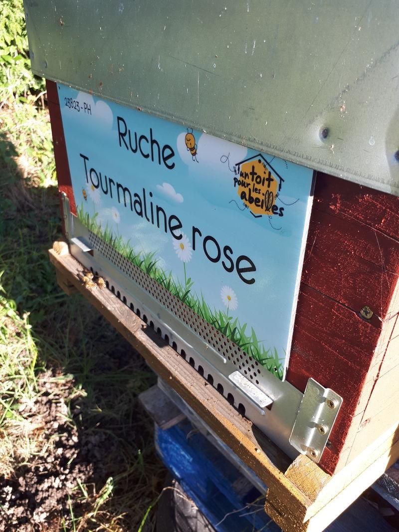 La ruche Tourmaline rose