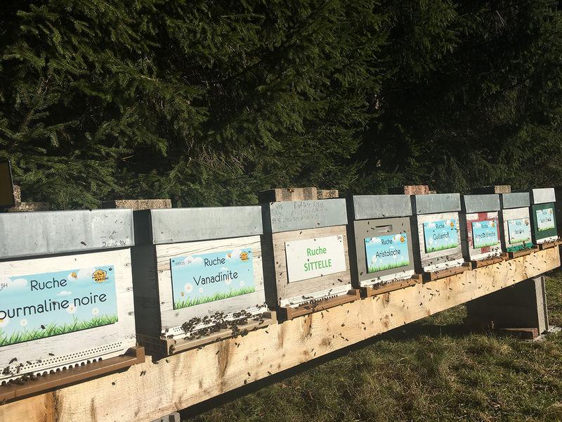 La ruche Tourmaline noire