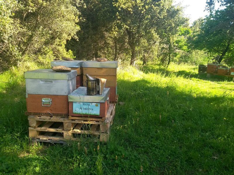 La ruche A baiocca