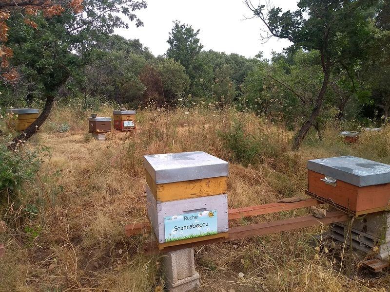 La ruche Scannabeccu