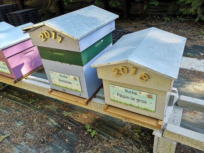La ruche Pépin le gros