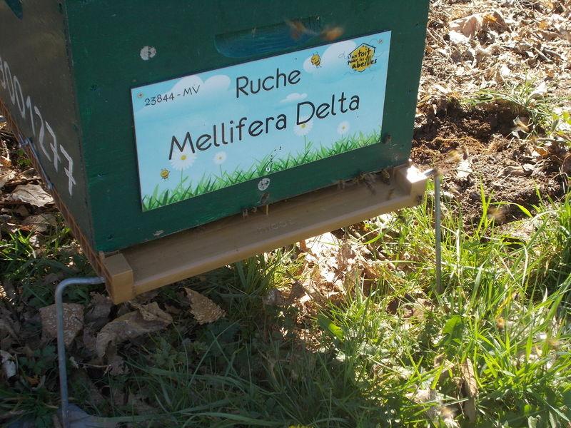 La ruche Mellifera Delta