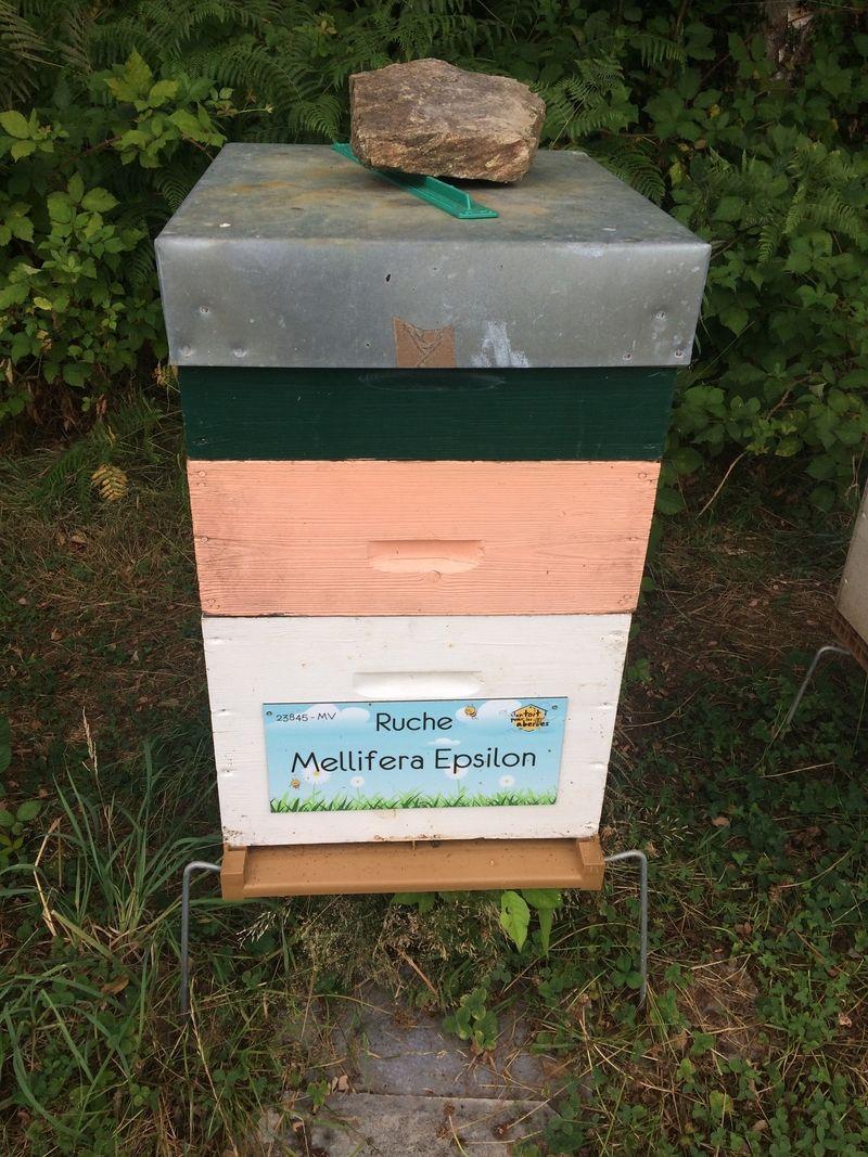 La ruche Mellifera Epsilon