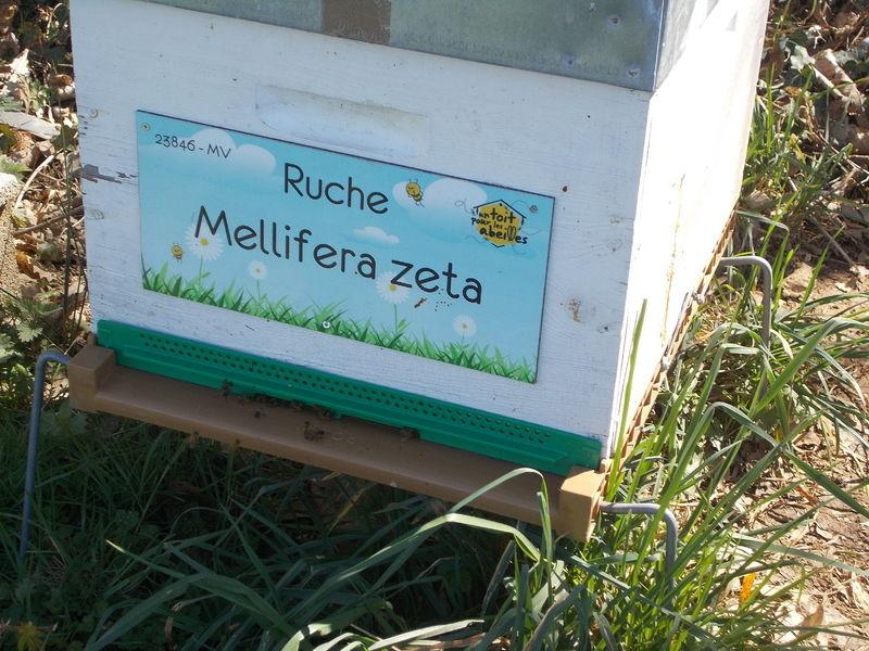 La ruche Mellifera zeta