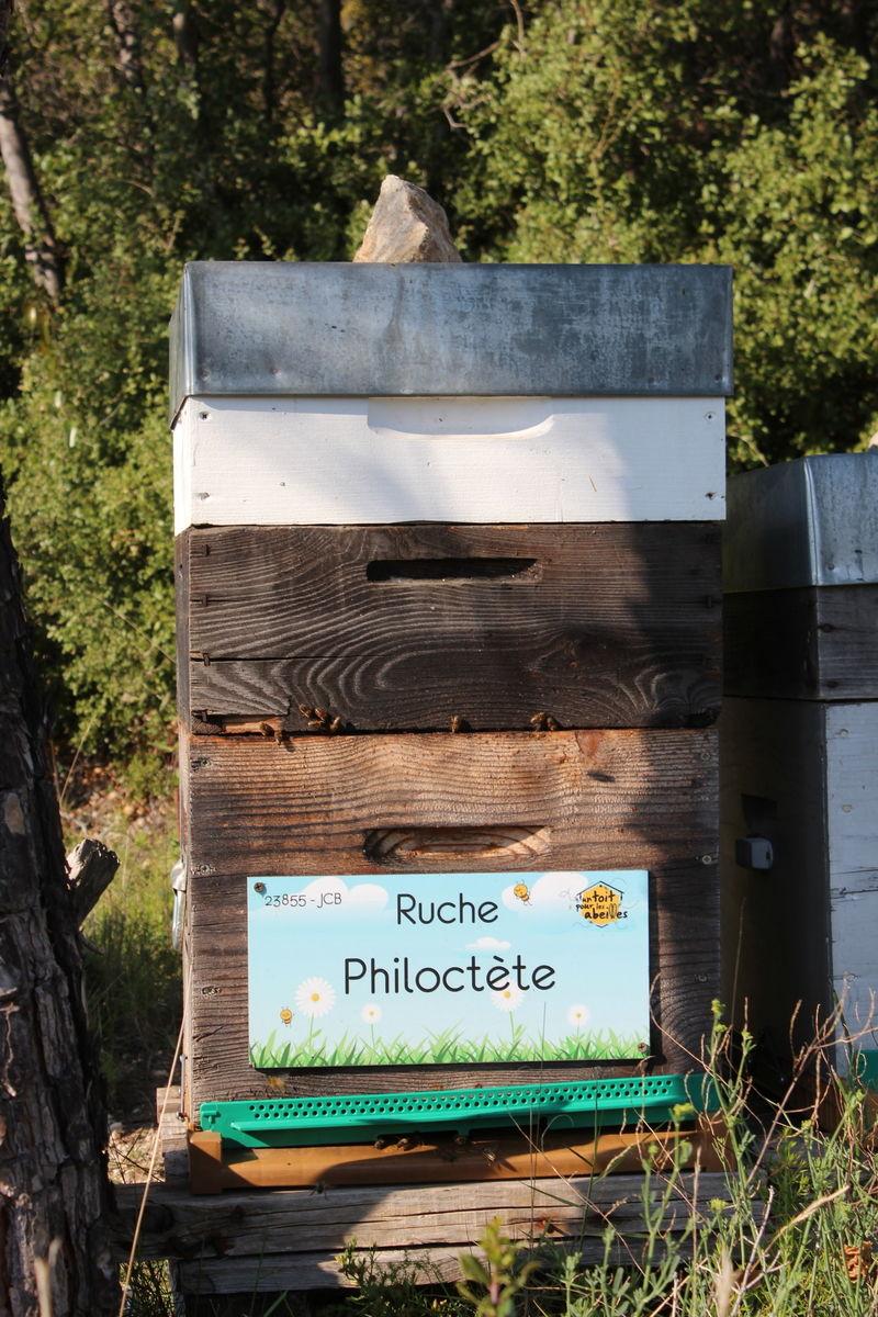 La ruche Philoctète