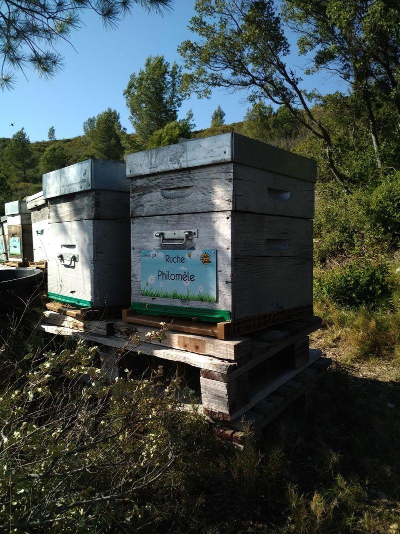 La ruche Philomèle