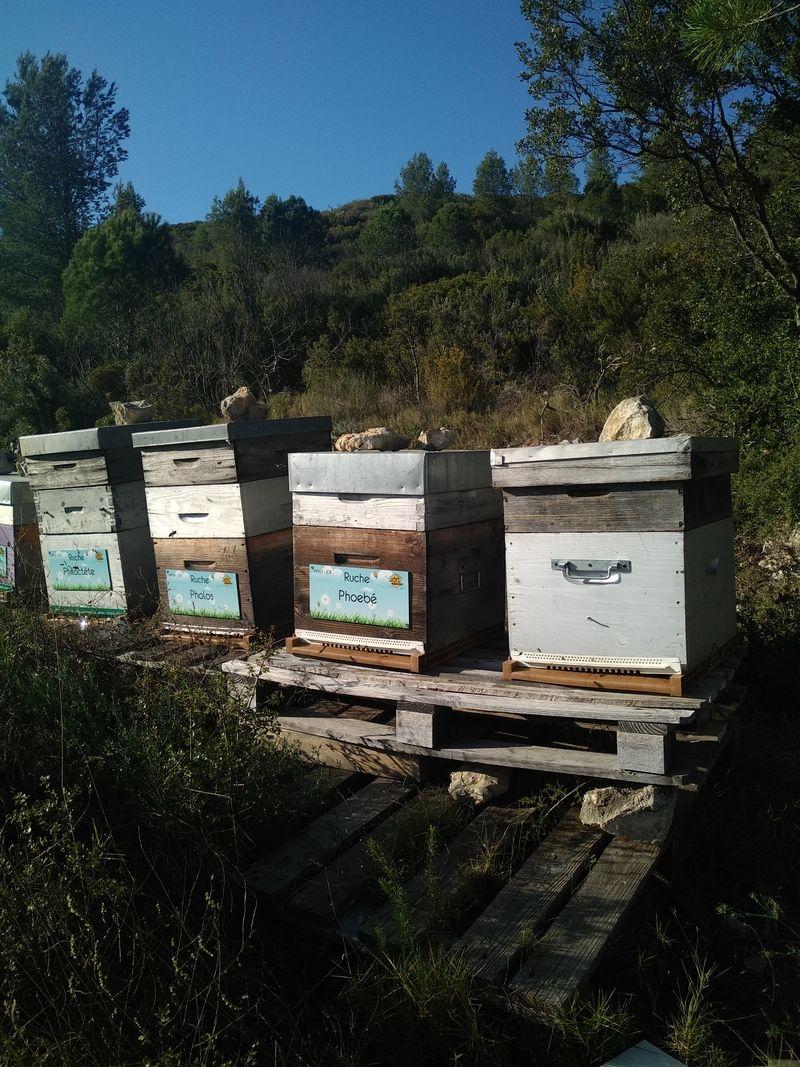 La ruche Phoebé