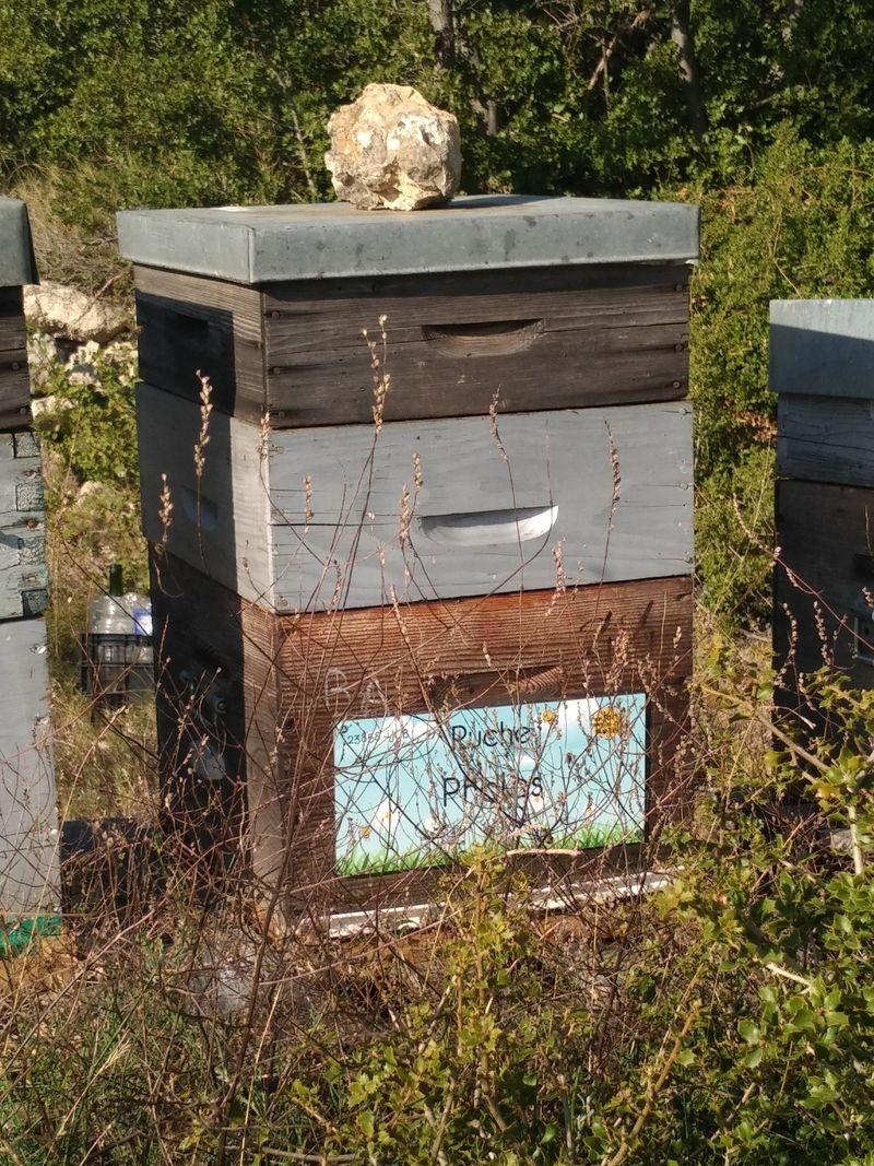 La ruche Pholos