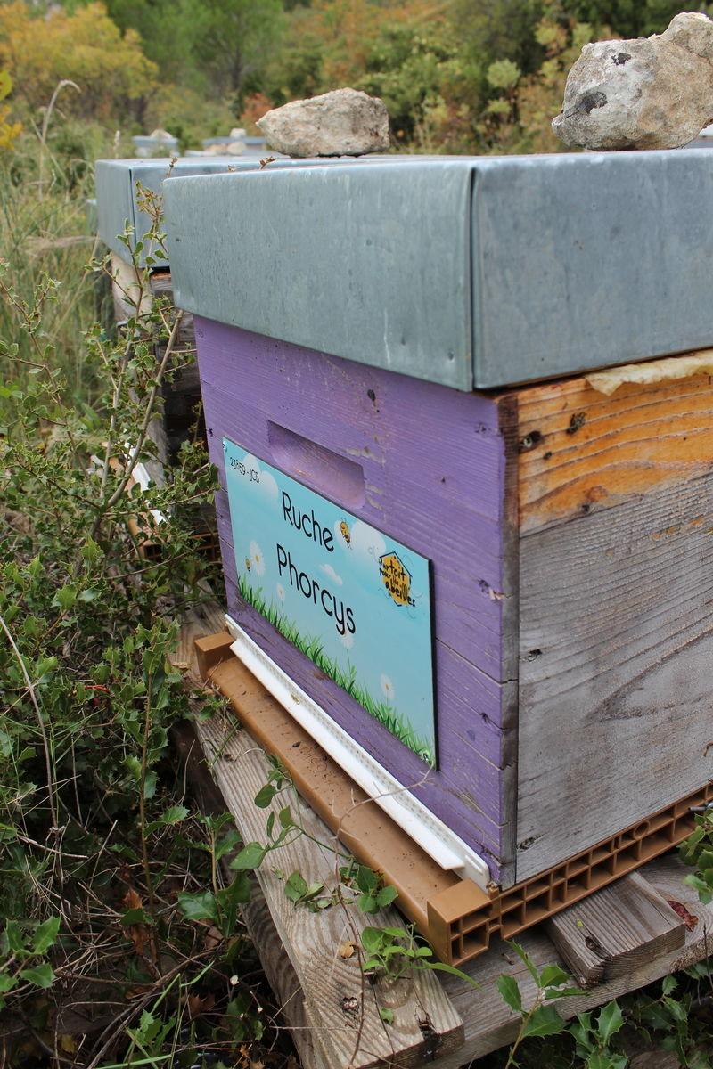 La ruche Phorcys