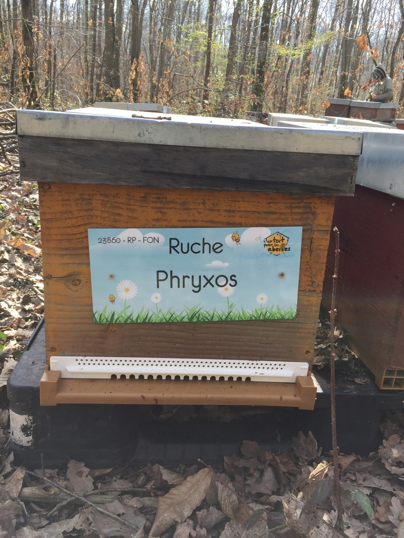 La ruche Phryxos