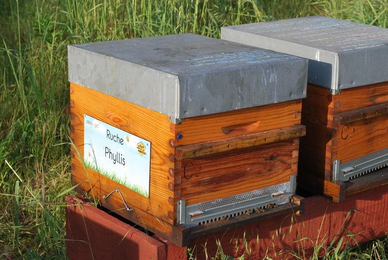 La ruche Phyllis