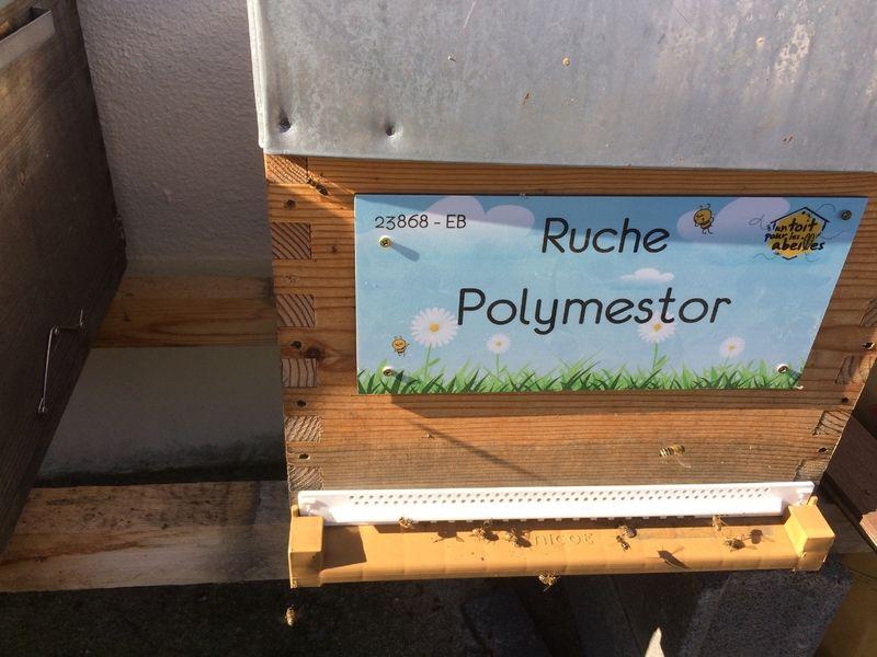 La ruche Polymestor