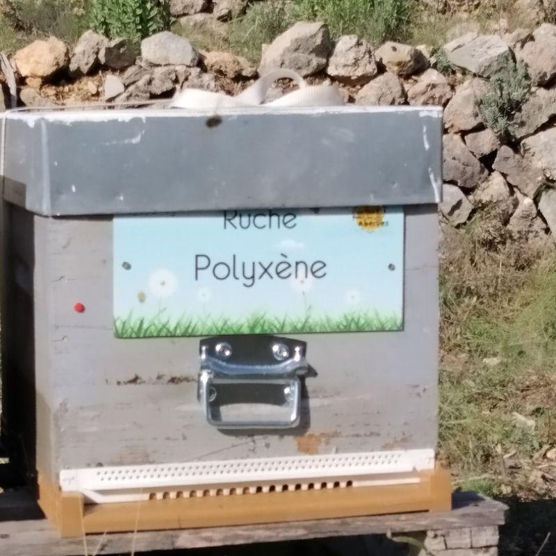 La ruche Polyxène