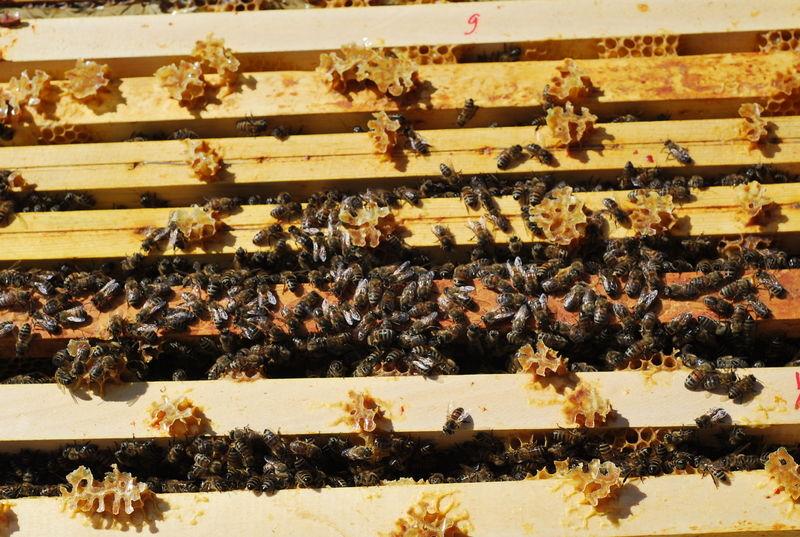 La ruche Poséidon