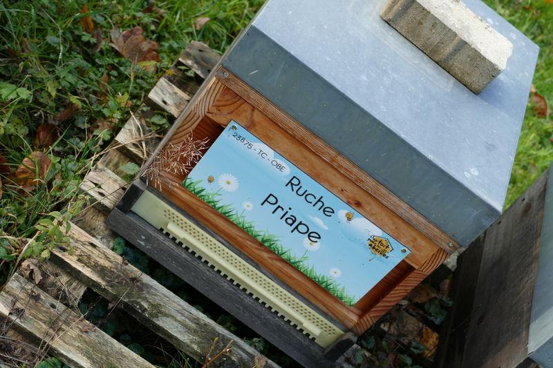 La ruche Priape