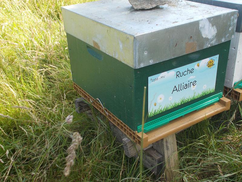 La ruche Alliaire