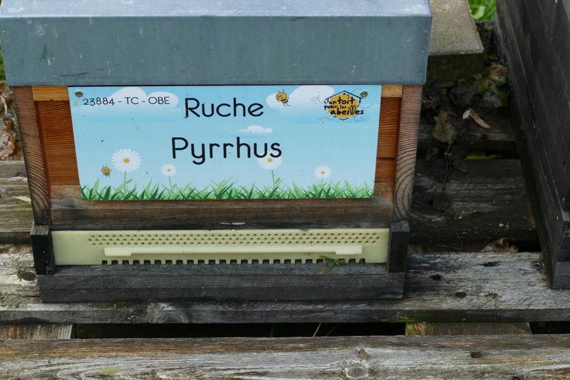 La ruche Pyrrhus
