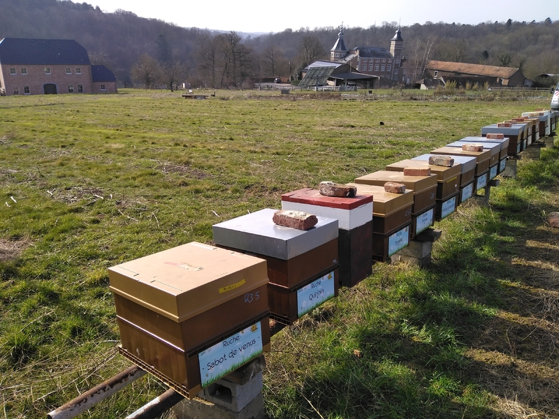 La ruche Quirinus