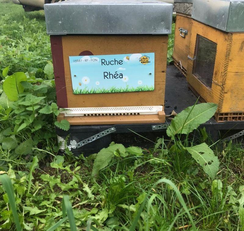 La ruche Rhéa