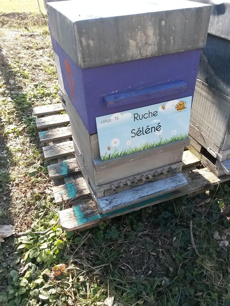 La ruche Séléné