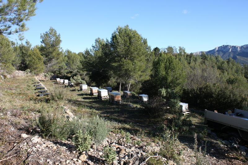 La ruche Sémélè
