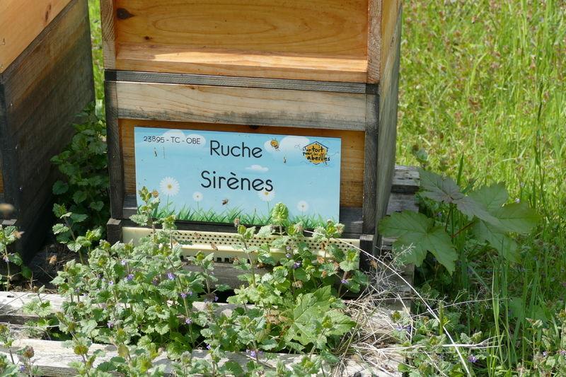 La ruche Sirènes