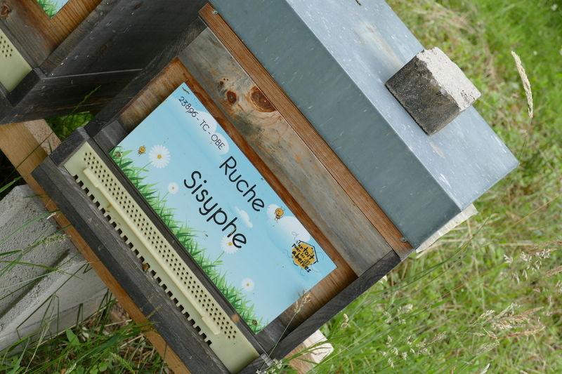 La ruche Sisyphe