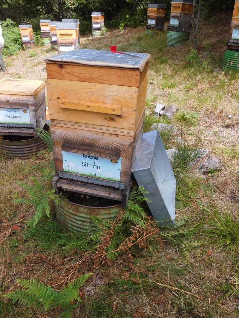 La ruche Sithon