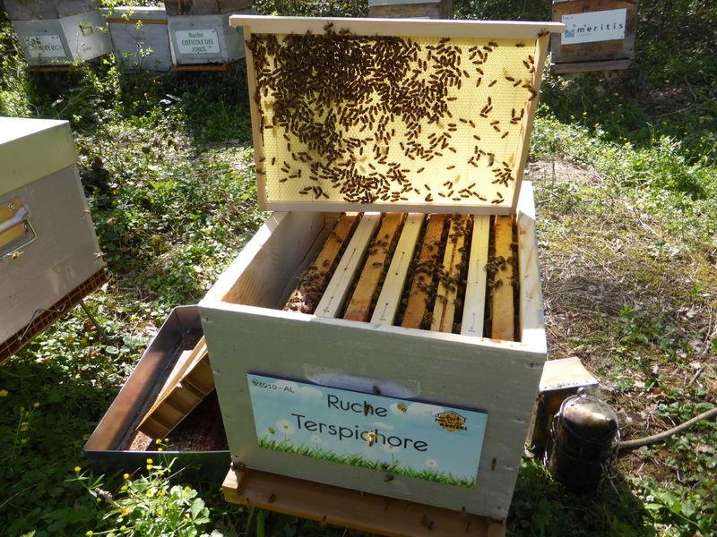 La ruche Terspichore