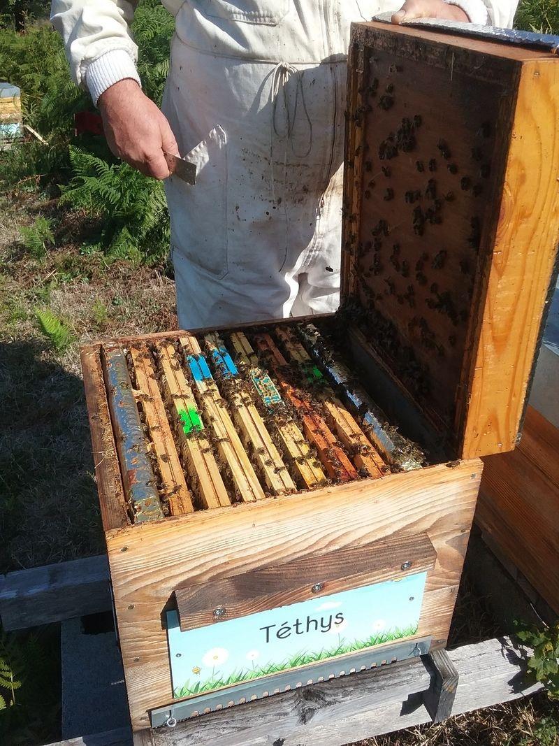 La ruche Téthys
