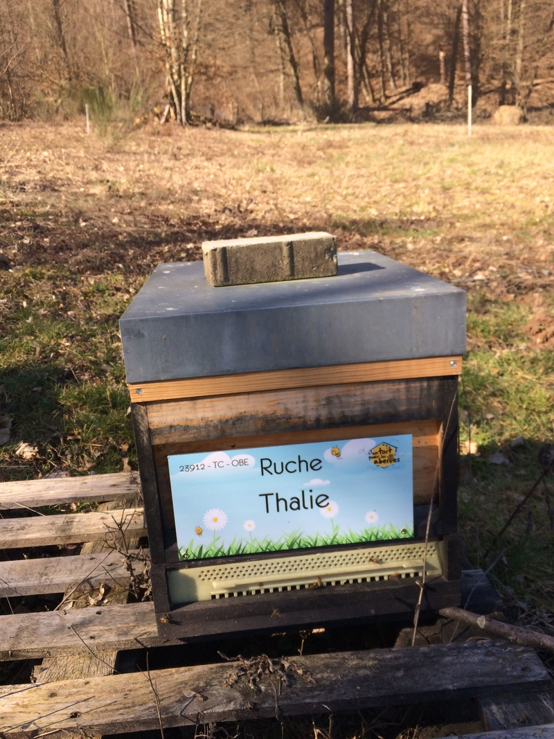 La ruche Thalie