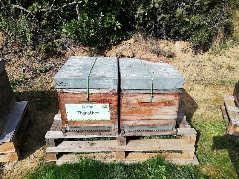 La ruche Thanathos
