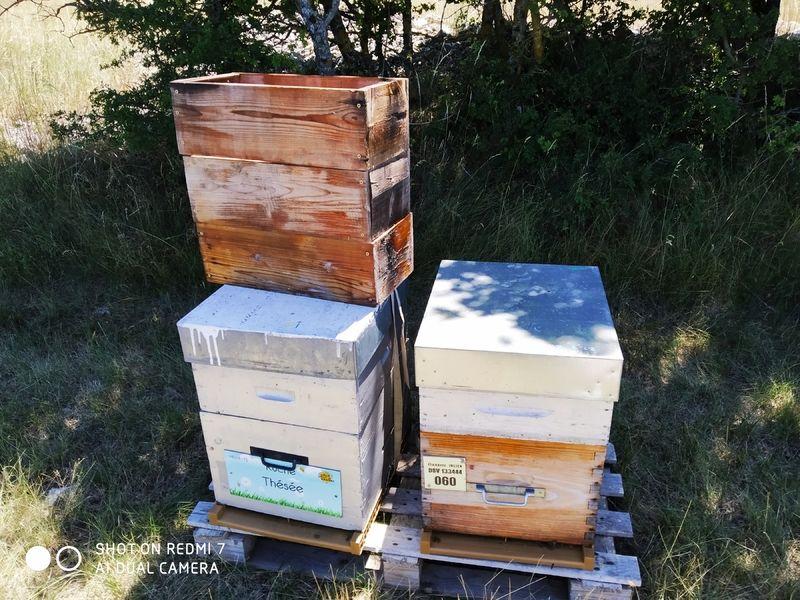 La ruche Thésée