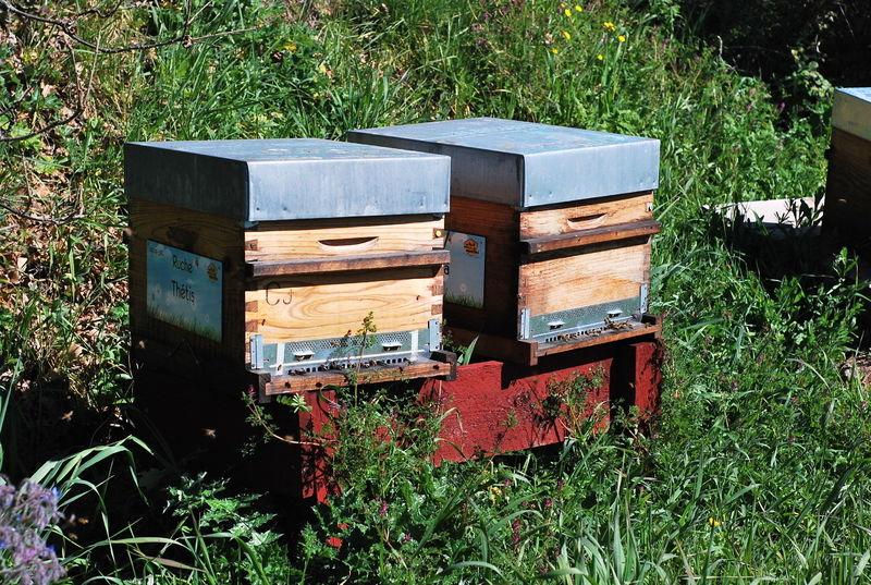La ruche Thétis
