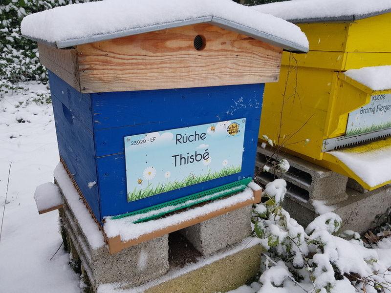 La ruche Thisbé